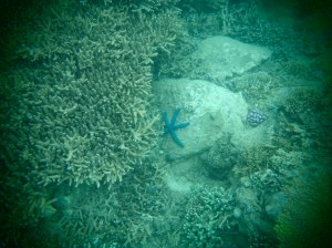Blue Starfish off the cost of Nha Trang, Vietnam